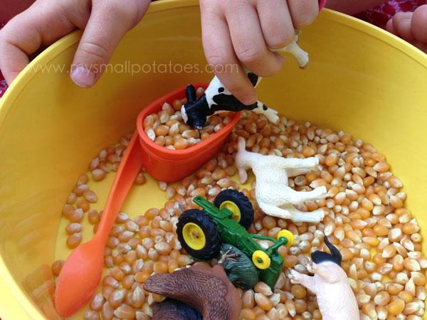feedingthecows