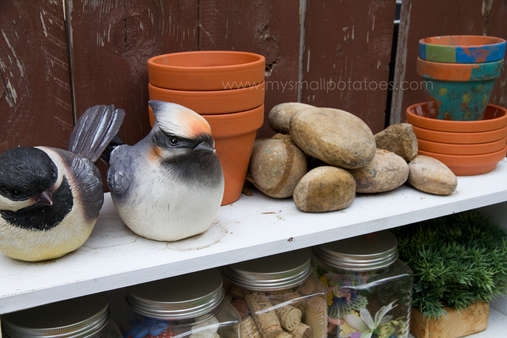 birds_pots_rocks